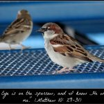 Two Sparrows: An Assurance from God