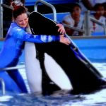 Shamu-Photo Copyright: Mommy Snippets