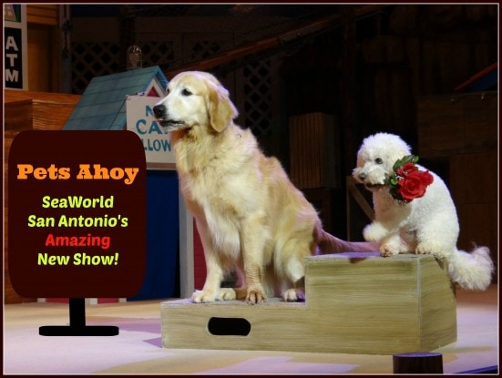 Pets Ahoy- SeaWorld San Antonio's Amazing New Show!- Mommy Snippets