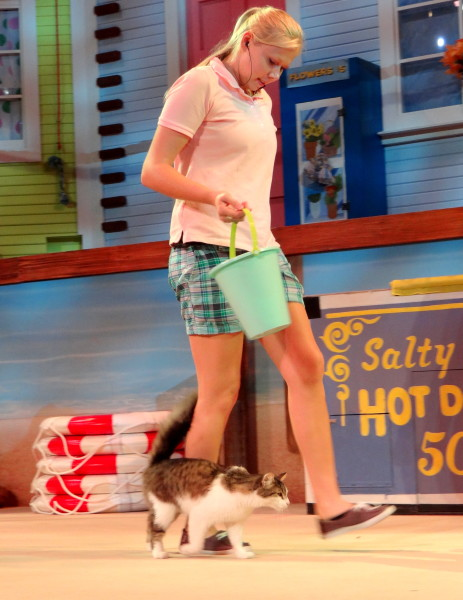 Pets Ahoy, SeaWorld San Antonio's newest show- Mommy Snippets (29)
