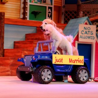 Pets Ahoy- SeaWorld San Antonio's Amazing New Show!