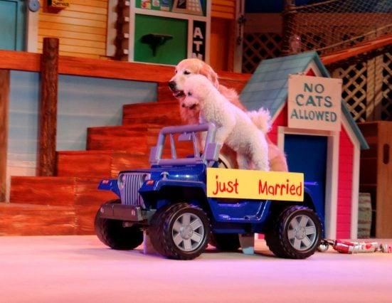 Pets Ahoy, SeaWorld San Antonio's newest show- Mommy Snippets (46)