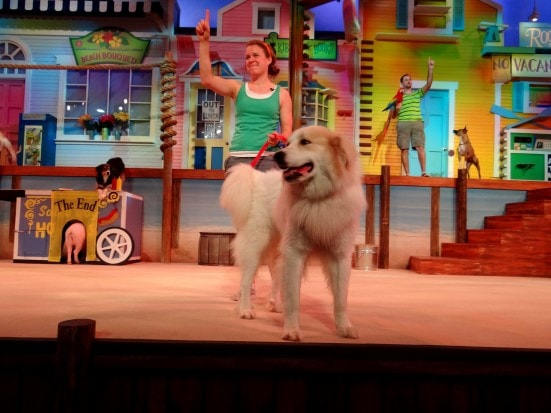 Pets Ahoy, SeaWorld San Antonio's newest show- Mommy Snippets (50)