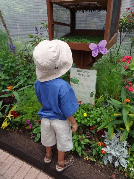 Tinker Bell's Butterfly House- the highlight of Epcot's 20th Flower and Garden Festival, Walt Disney World. {Travel with Mommy Snippets} (2)