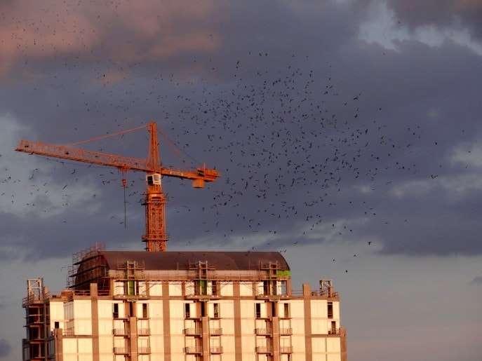 The Flight of the Congress Avenue Bridge Bats  (19)