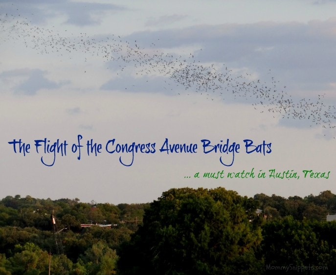 The Flight of the Congress Avenue Bridge Bats - Mommy Snippets, Travel, Austin, Texas
