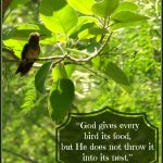 Almost Wordless Wednesday: God gives every bird