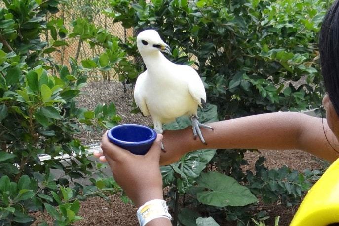 Roa's Aviary is Aquatica's new feathered exhibit (9)