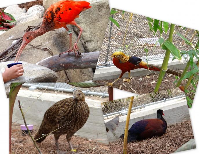 Roa's Aviary