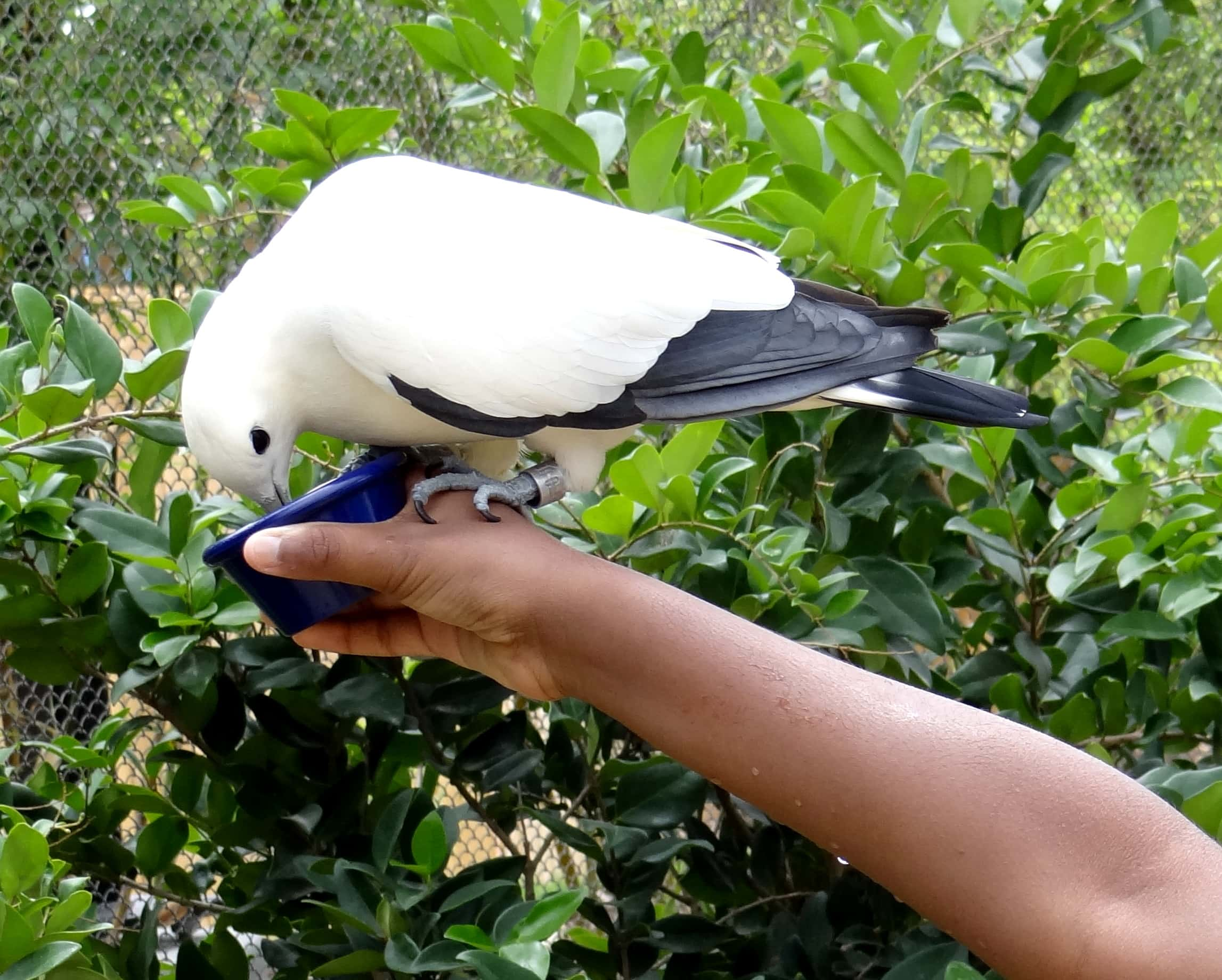 Everyone needs to eat! (ROA's Aviary, Aquatica)