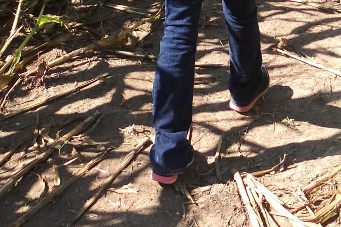 corn maze (58)
