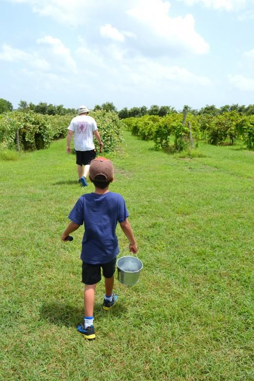 Grape_stomping_Windy_Winery_Brenham_Texas_#VisitBrenham_Travel (15)