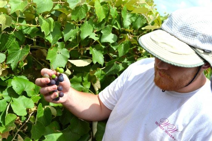 Grape_stomping_Windy_Winery_Brenham_Texas_#VisitBrenham_Travel (17)