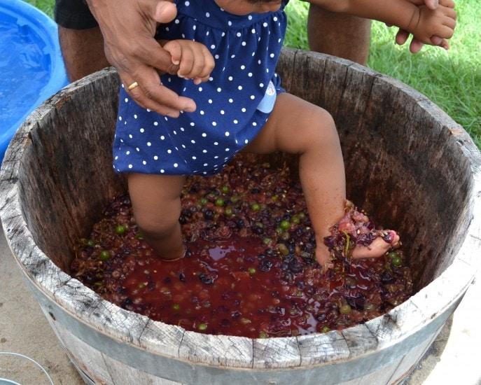 Grape_stomping_Windy_Winery_Brenham_Texas_#VisitBrenham_Travel (74)
