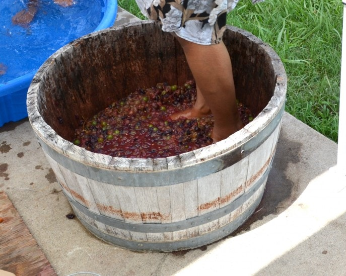 Grape_stomping_Windy_Winery_Brenham_Texas_#VisitBrenham_Travel (88)