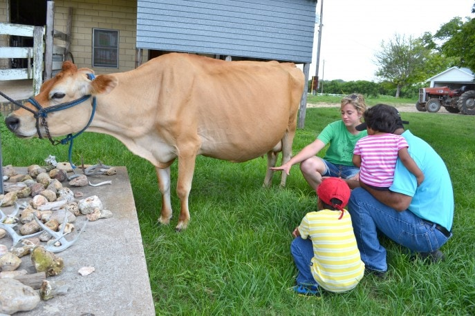 Milk a cow, bottle feed a calf and more at Jersey Barnyard {#VisitBrenham} Photo-Mommy Snippets copyright (119)