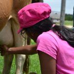 Milk a cow, bottle feed a calf and more at Jersey Barnyard {#VisitBrenham}
