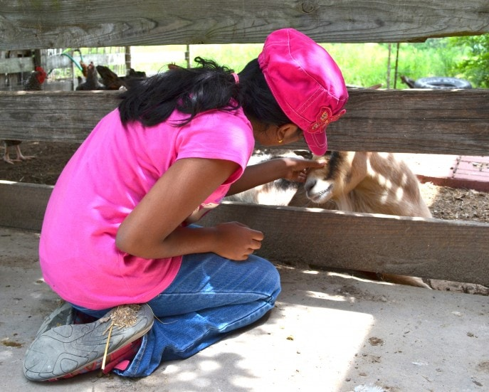 Milk a cow, bottle feed a calf and more at Jersey Barnyard {#VisitBrenham} Photo-Mommy Snippets copyright (32)