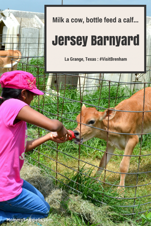 Milk a cow, bottle feed a calf and more at Jersey Barnyard {#VisitBrenham} Photo-Mommy Snippets Travel Texas