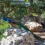 Jerusalem Biblical Zoo — Israel for Families