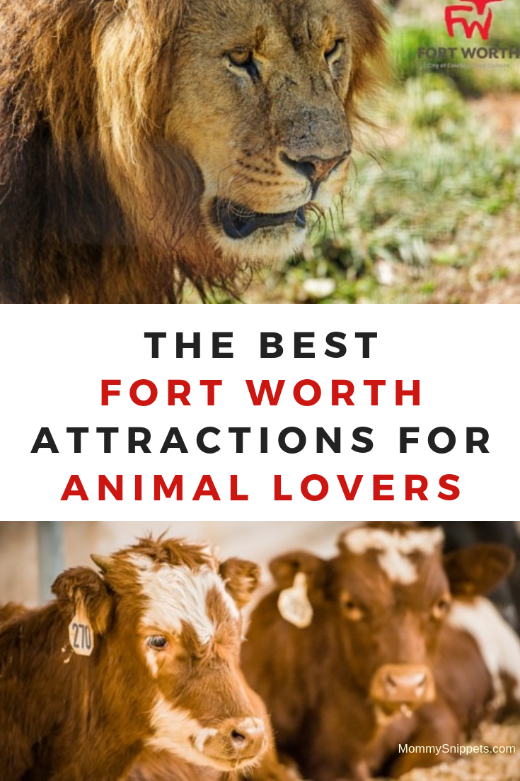 The best Fort Worth attractions for animal lovers- MommySnippets.com
