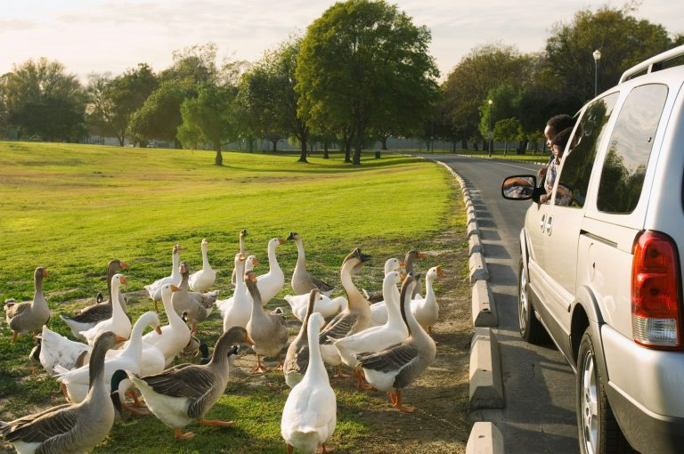 Why Road Trips Make the Best Travel Solution for Family Vacations