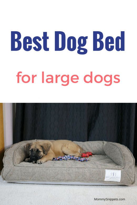 Large Dog Beds Designer