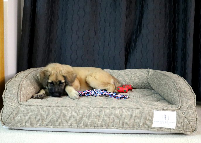 The Best Dog Bed for a Large Dog- MommySnippets (26)