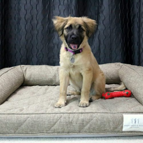The Best Dog Bed for a Large Dog- MommySnippets (9)