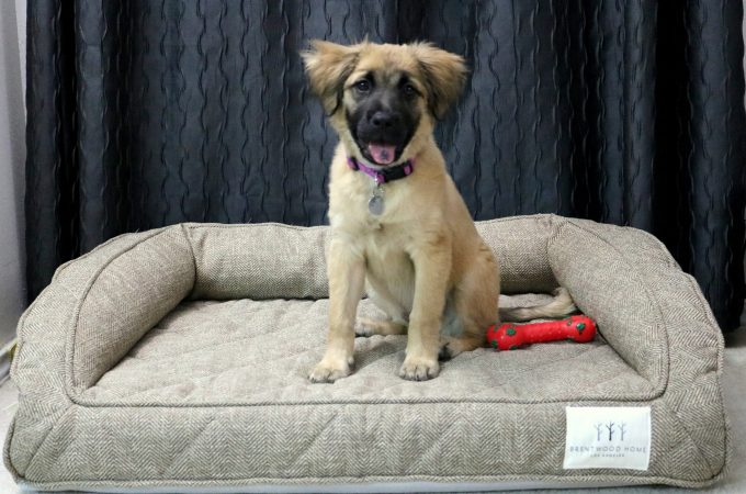 The Best Dog Bed for a Large Dog (+ Giveaway)