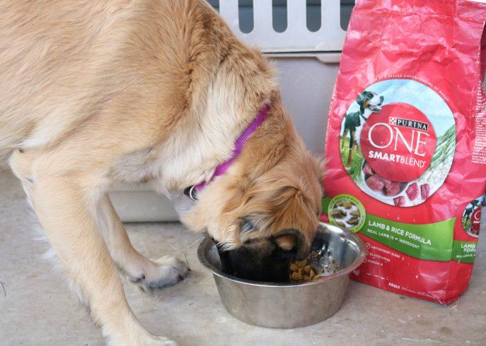 Petsmart Dry Dog Food Brands