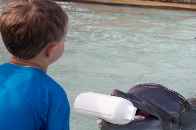 Rise and Shine with Dolphins at Atlantis Bahamas