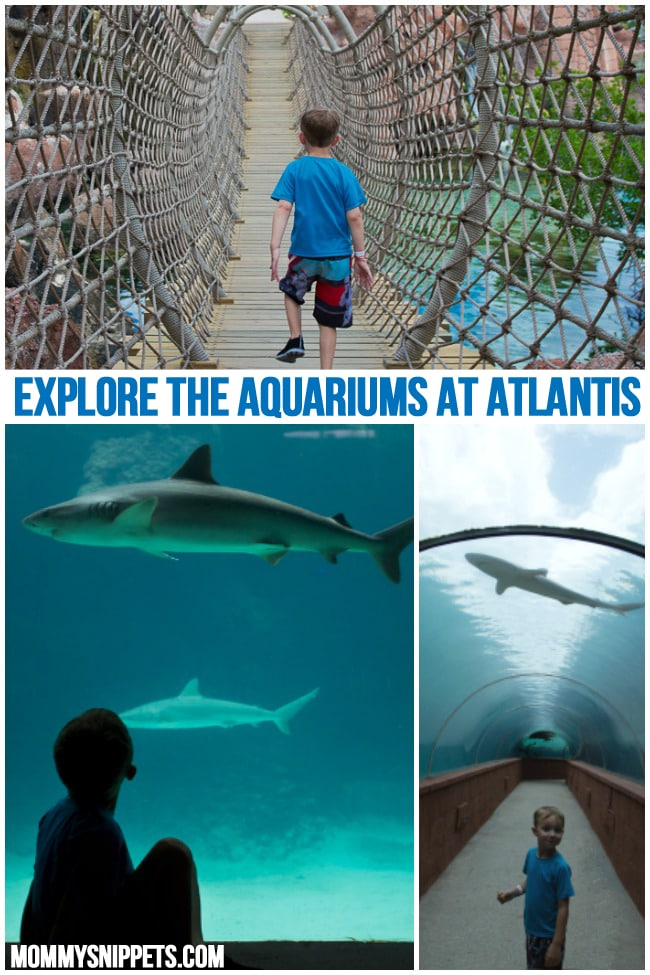 Explore the Aquariums at Atlantis