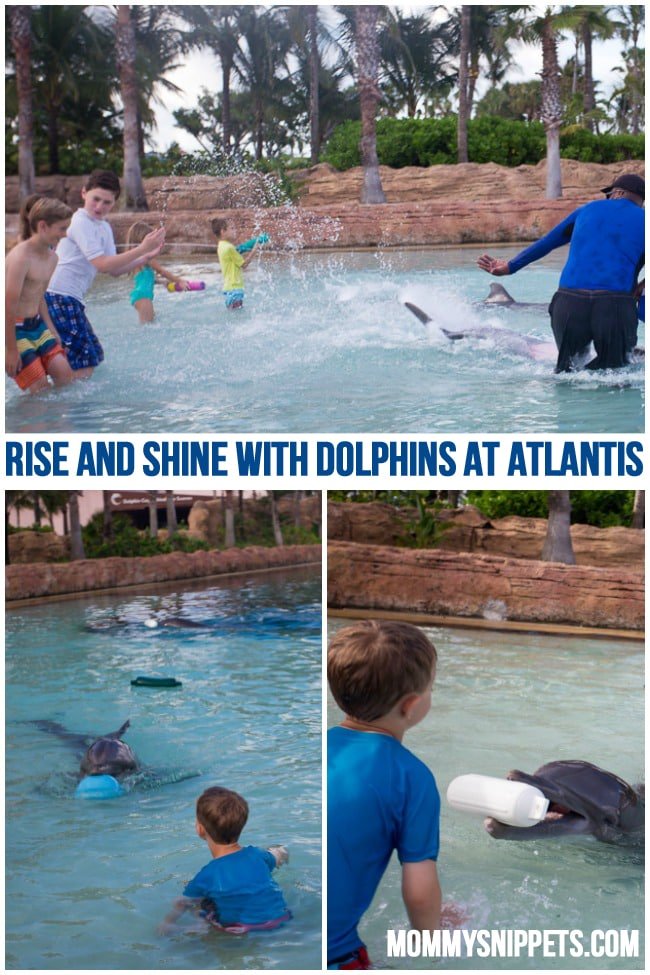 Rise and Shine with Dolphins