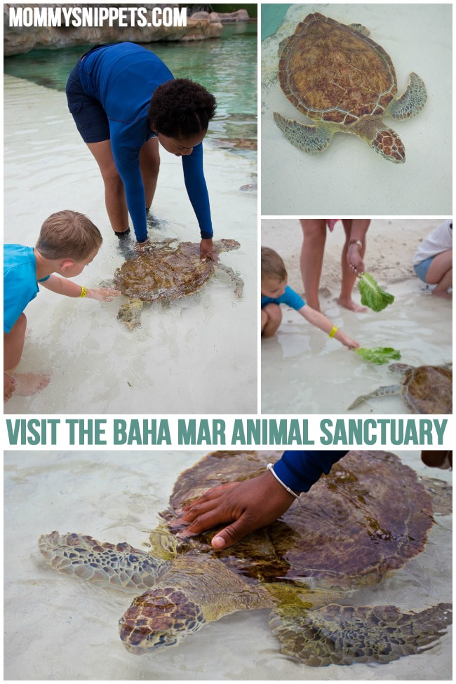 Visit Baha Mar Animal Sanctuary