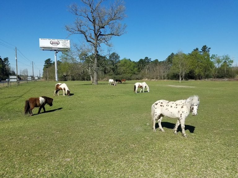 15 Places to Spend the Day, In and Around Humble, Texas