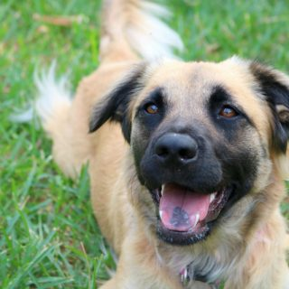 Best tips to ensure your dog is healthy and happy