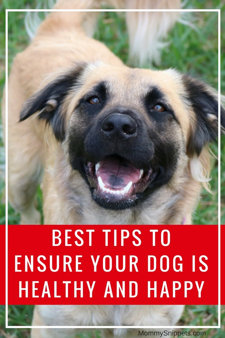 Best tips to ensure your dog is healthy and happy-MommySnippets.com #ProPlanPossibilities #CollectiveBias #ad