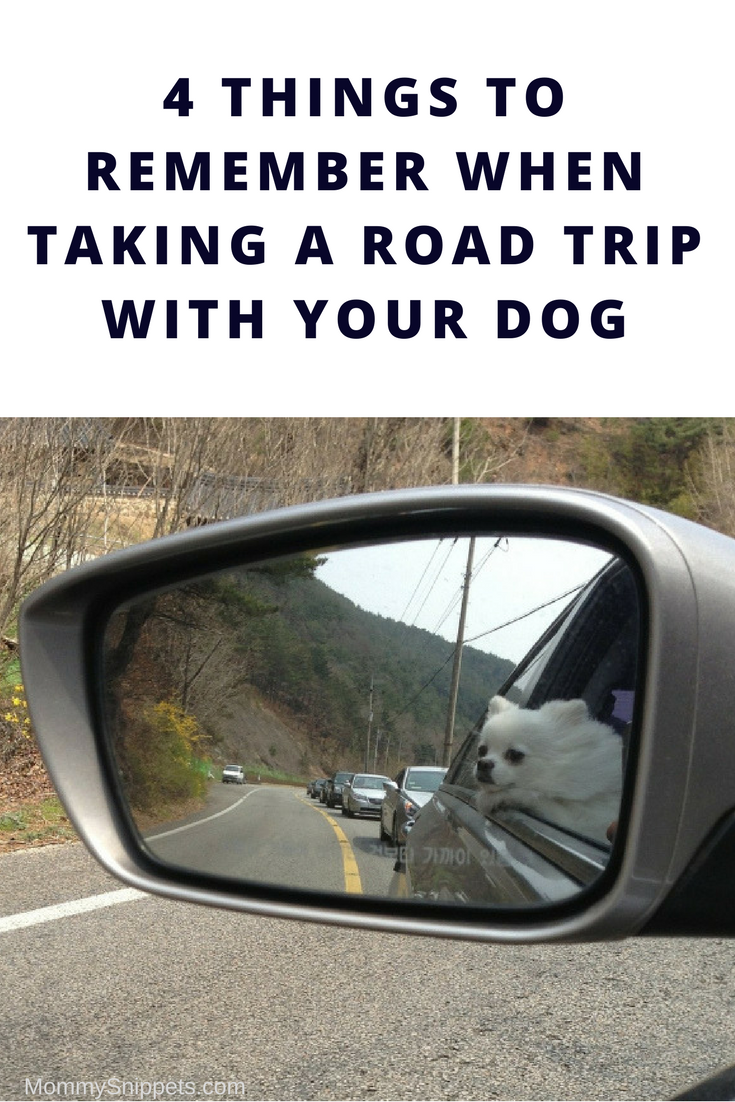 4 Things To Remember When Taking A Road Trip With Your Dog - MommySnippets.com