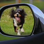 4 Things To Remember When Taking A Road Trip With Your Dog
