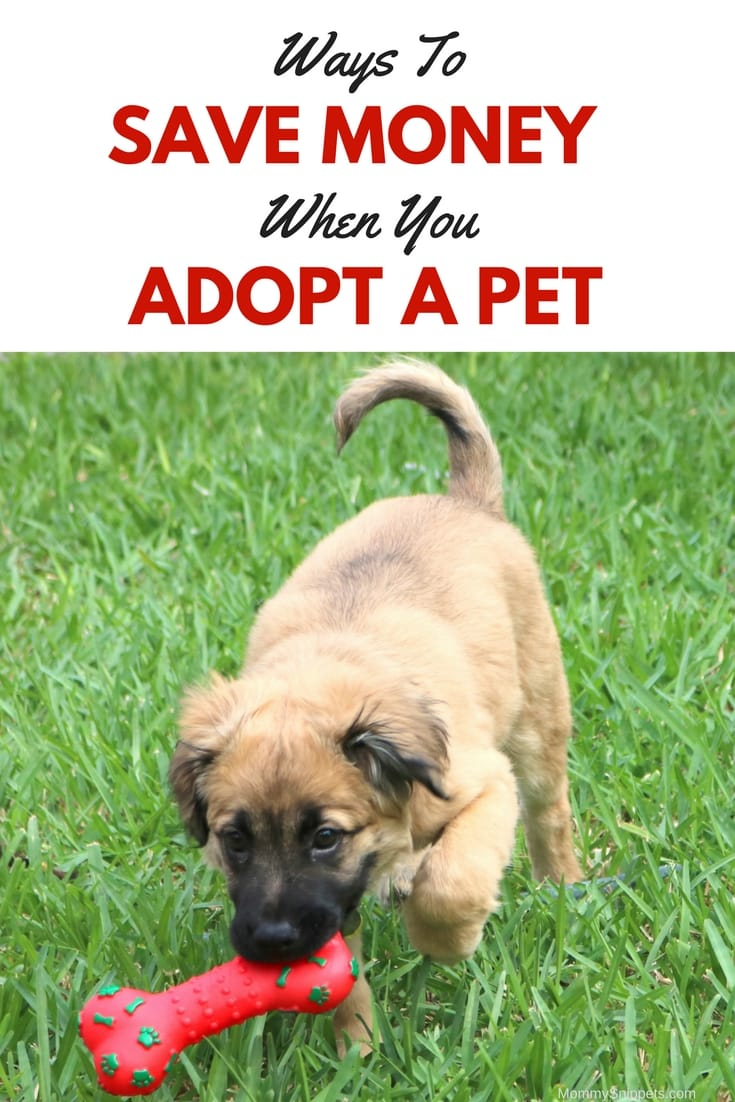 Ways to Save Money when you Adopt a Pet (+ A Homemade Dog Toy Tutorial) - MommySnippets.com #FortunaForAll #cbias #ad