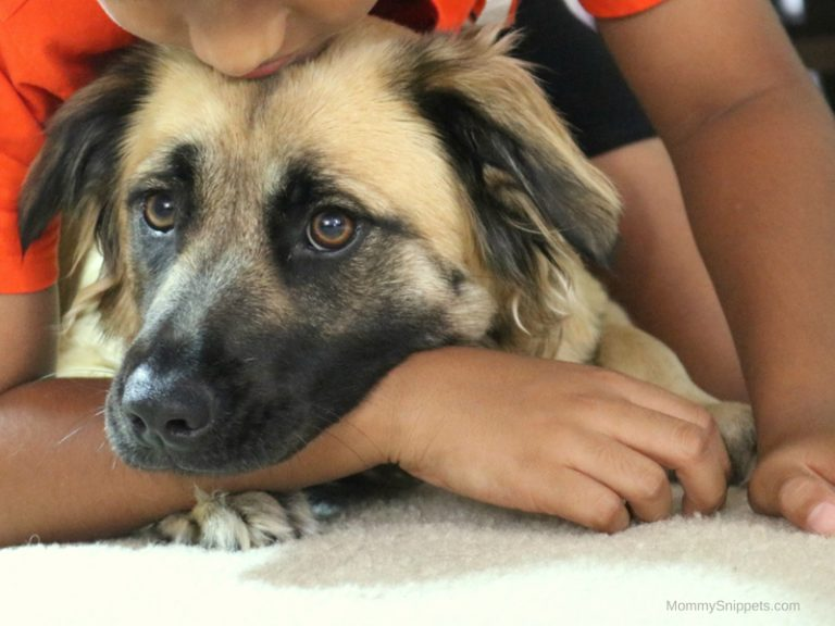 5 Reasons Why It's Important Your Kids Have Pets While Growing Up