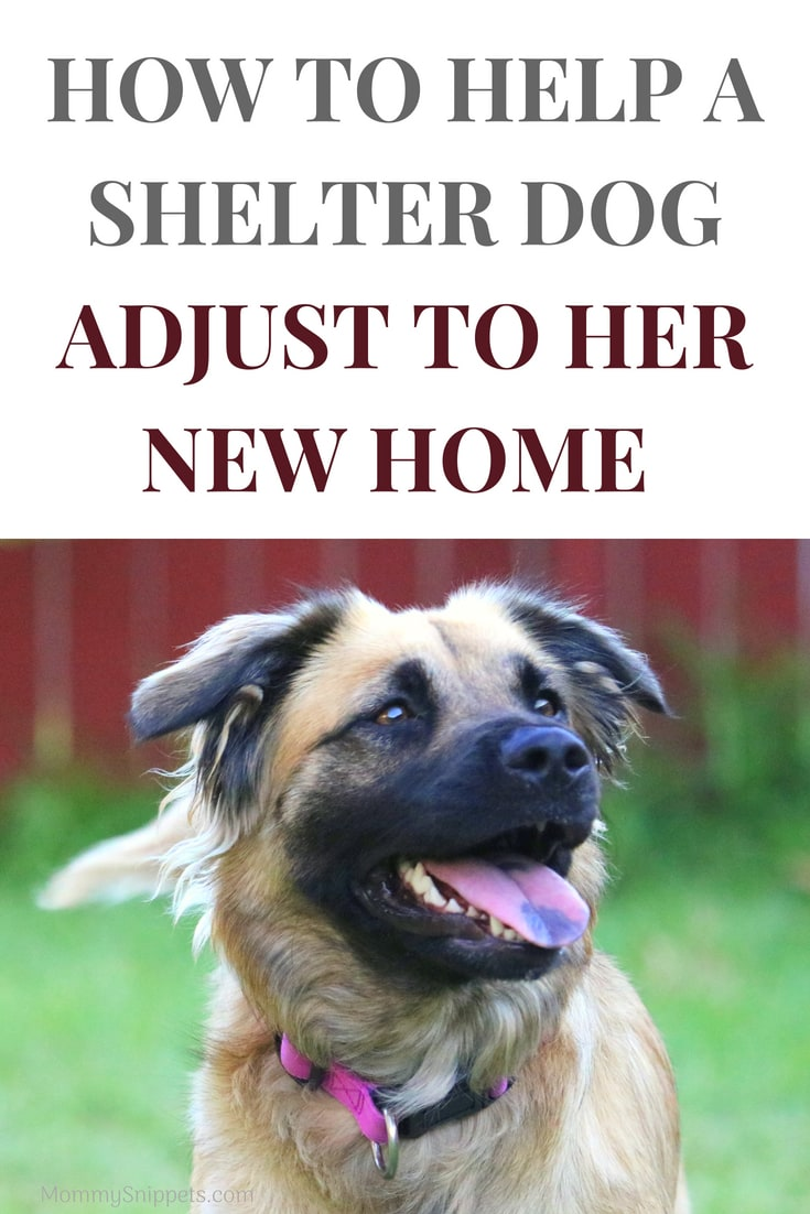 #ad How to help a shelter dog adjust to her new home- MommySnippets.com #Fuelthewag