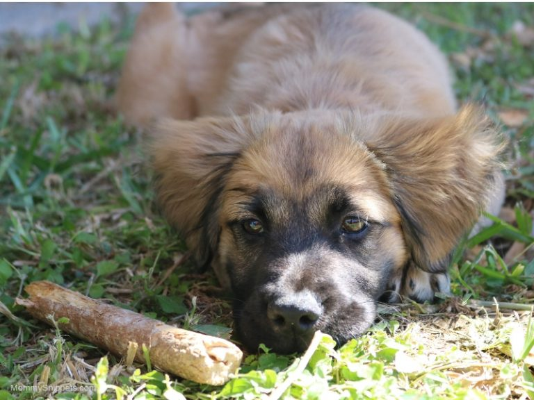 The Best Way to Support Healthy Digestion in a Dog