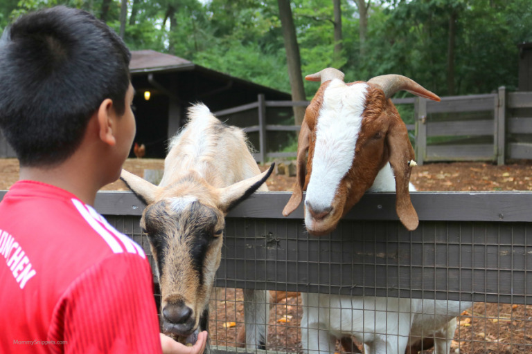 Explore, and engage with the wild at The Good Zoo (Part 2)