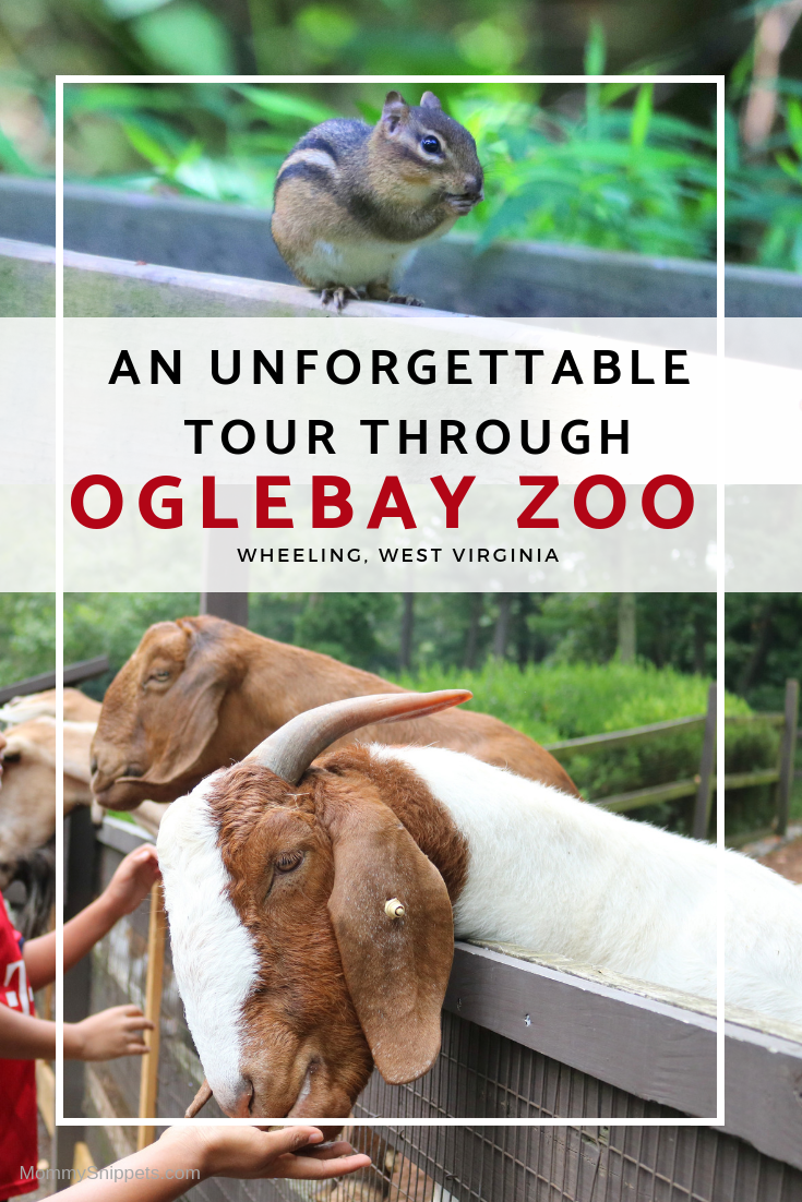 An unforgettable behind-the-scenes tour at Oglebay Zoo -MommySnippets.com #almostheaven @WVTOURISM #hosted @oglebayresort #wvpartner #MSTeamTravels (29)