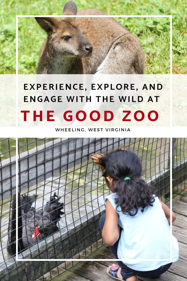Experience, explore, and engage with the wild at The Good Zoo -MommySnippets.com #almostheaven @WVTOURISM #hosted @oglebayresort #wvpartner #MSTeamTravels