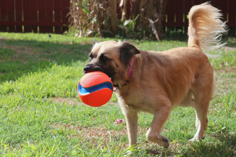 Why you need to make Fetch happen for your dog