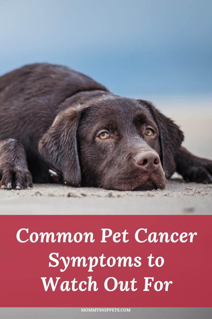 Common Pet Cancer Symptoms to Watch Out For- MommySnippets.com #sponsored