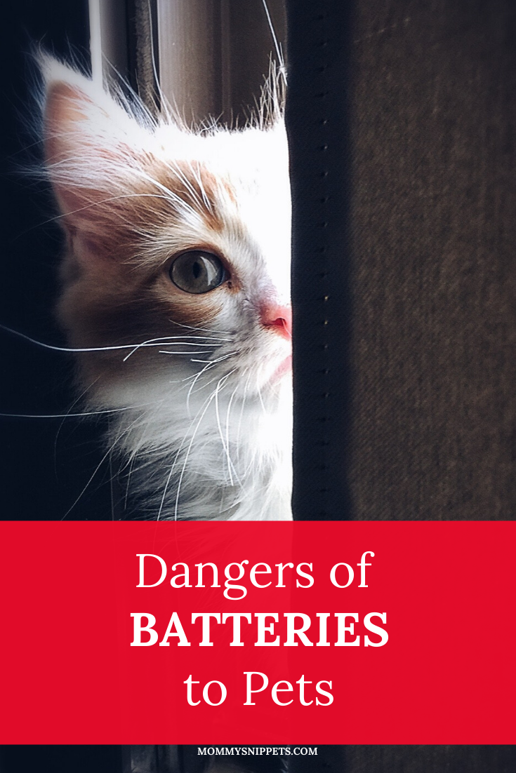 Dangers of Batteries to Pets- MommySnippets.com #sponsored